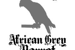 01-african-grey-parrot-copy
